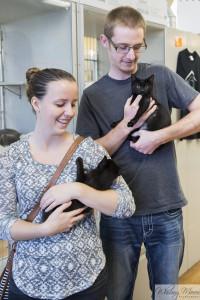 Adopt a cat Seattle Area Feline Rescue