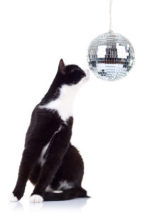 black and white cat looking at a big disco