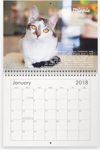 rescue cat calendar
