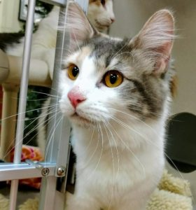Rescued kitty Jolie used to have ringworm. She's so glad she got a second chance!