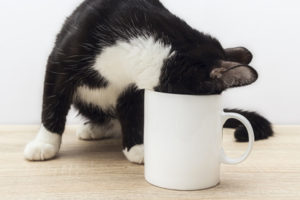 Coffee is a common household danger for cats