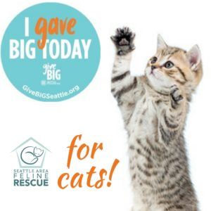GiveBIG Social Icon