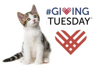 #GivingTuesday Cat