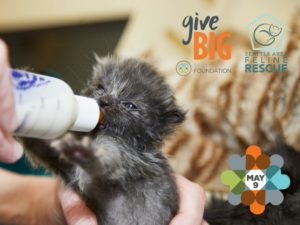 GiveBIG for Bottle Babies