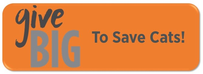 GiveBIG 2017 Donate Button