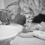 20160413 SAFe Cats LR BW-4