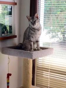 Bindi adoption update