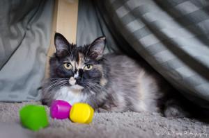 20160324 Foster Cat Cassie LR web-1