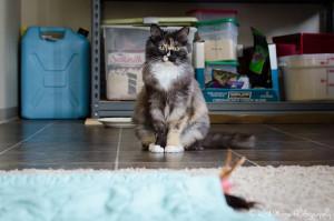 20160324 Foster Cat Cassie LR web-10