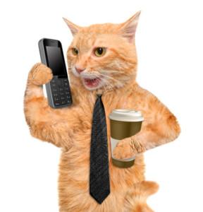 Business cat.