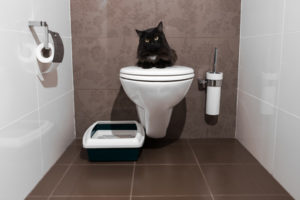 Confine your new kitty in a bathroom