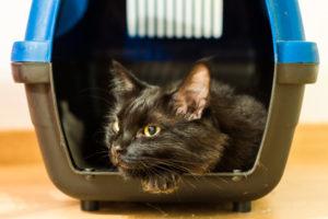 How to Rehome a Cat