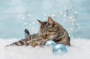 Cat with ornaments