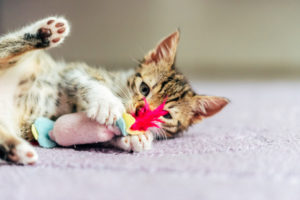 Cute Baby Cat Playing