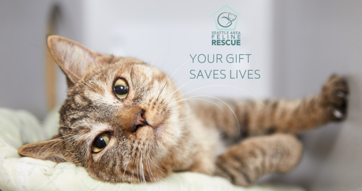 Donate for cats