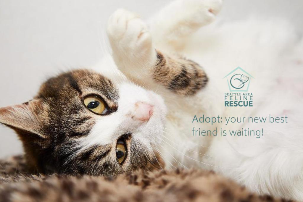 Rescue Cat Vet Check