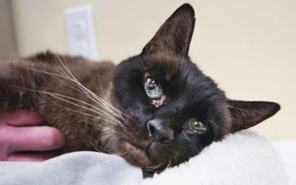 Anders, injured senior kitty