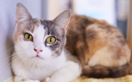 Seattle Area Feline Rescue • Seattle Area Feline Rescue