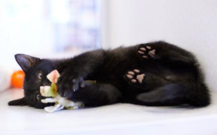 Seattle Area Feline Rescue • Seattle Area Feline Rescue