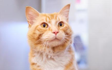 JDM Sample • Seattle Area Feline Rescue