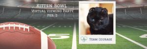 Virtual Viewing Party: Kitten Bowl 2020