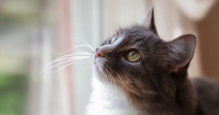 Moving Outside Cats Inside 9 Tips For A Happy Transition Seattle Area Feline Rescue