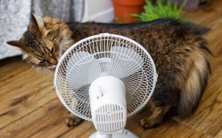 Cat sniffs fan