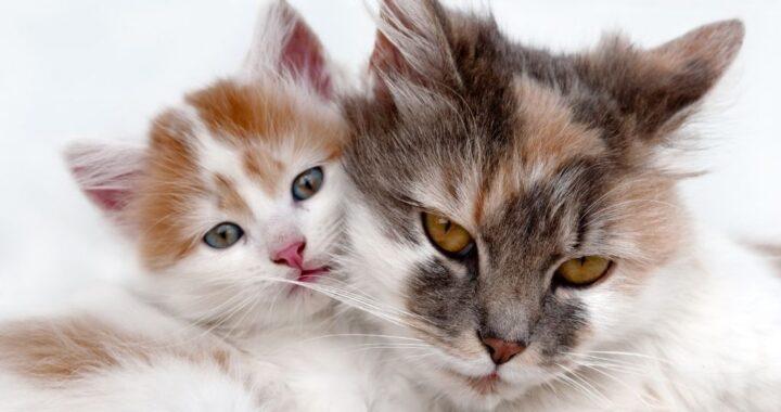Kitten and older cat